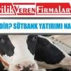 Sütbank Nedir? Sütbank Yatırımı Nasıl Yapılır?