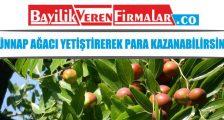 Hünnap Ağacı Yetiştirerek Para Kazanabilirsiniz – İş Fikirleri